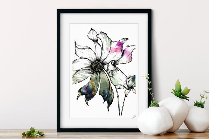Clematis Floral Illustration