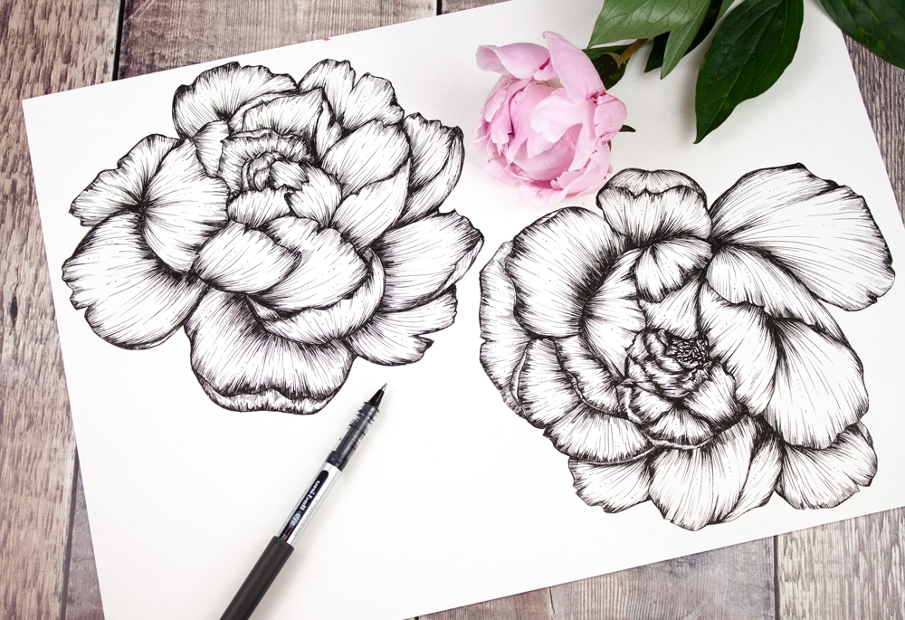 Sketchbook peony drawings by Jessica Wilde ©
