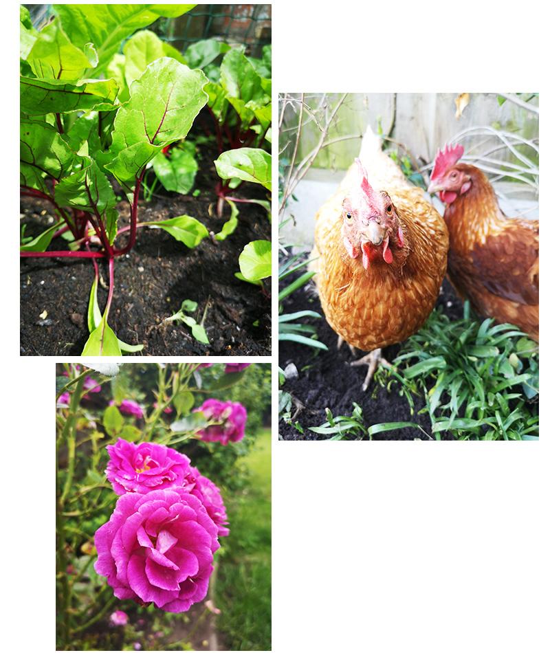 Biophilia & Gardening