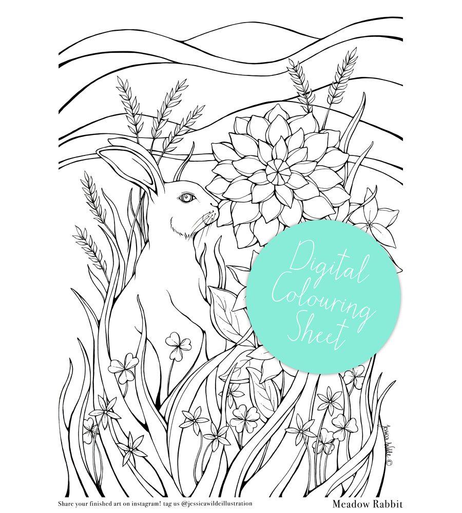 Meadow Rabbit Digital Colouring Sheet